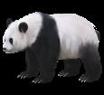 Panda ##STADE## - manto 65