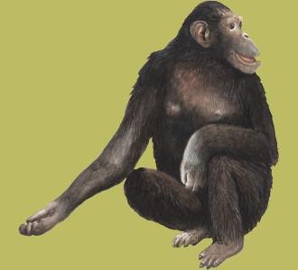 Accogli un animale della giungla di specie scimpanzé