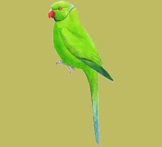Accogli un animale della giungla di specie cocorita verde