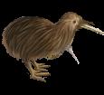 Kiwi ##STADE## - manto 52