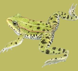 Accogli un animale della giungla di specie rana verde
