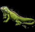 Iguane ##STADE## - manto 72