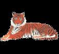 Tigre ##STADE## - manto 1340000005