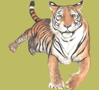 Accogli un animale della giungla di specie tigre