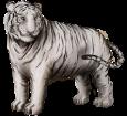 Tigre bianca ##STADE## - manto 9