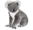 Koala ##STADE## - manto 52